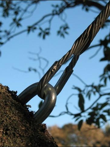 Tampa Tree Cabling