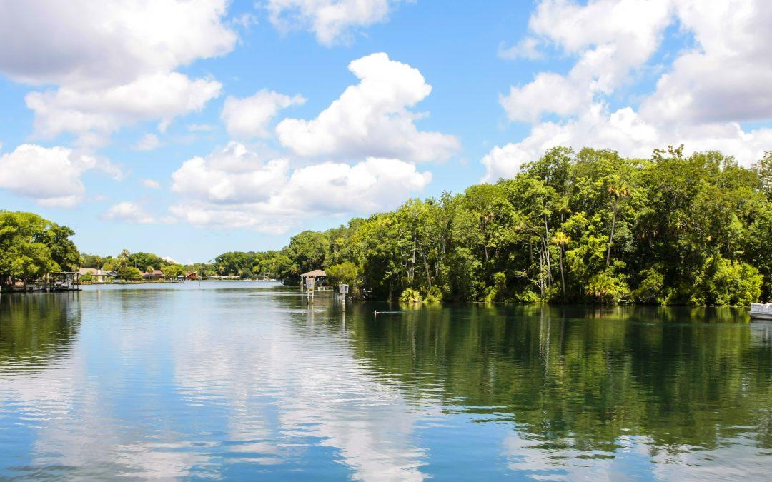 Florida's Mangrove Tree