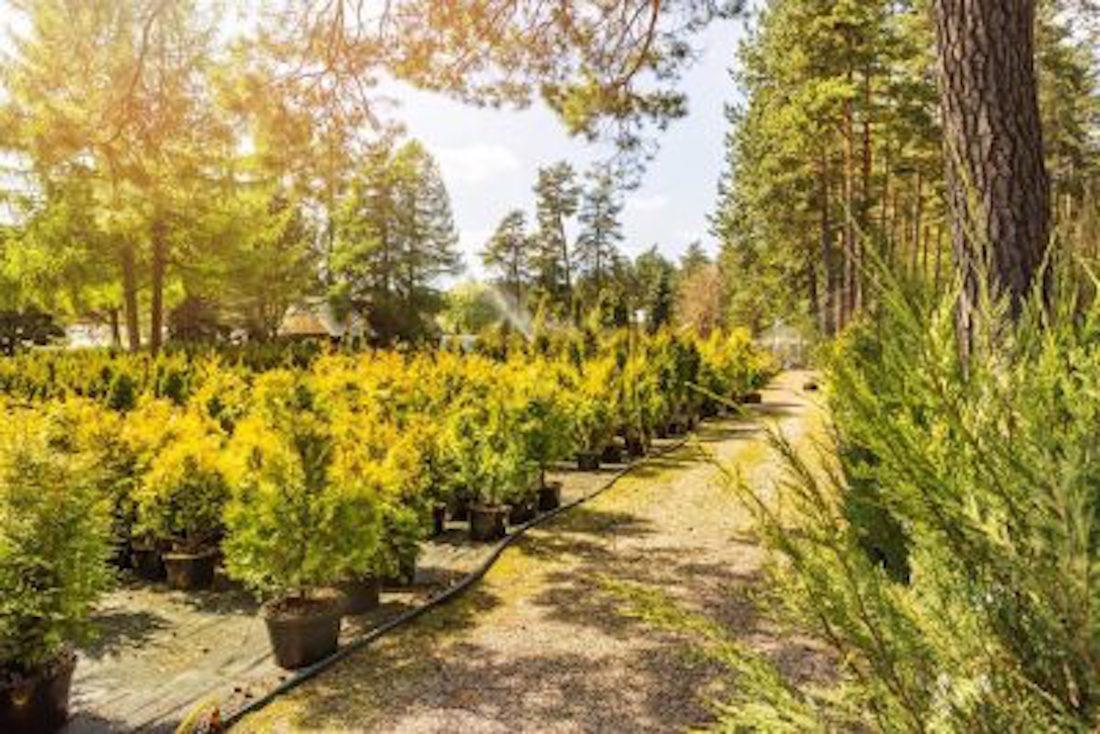 Best-Tree-Service-in-Lake-Magdalene-FL