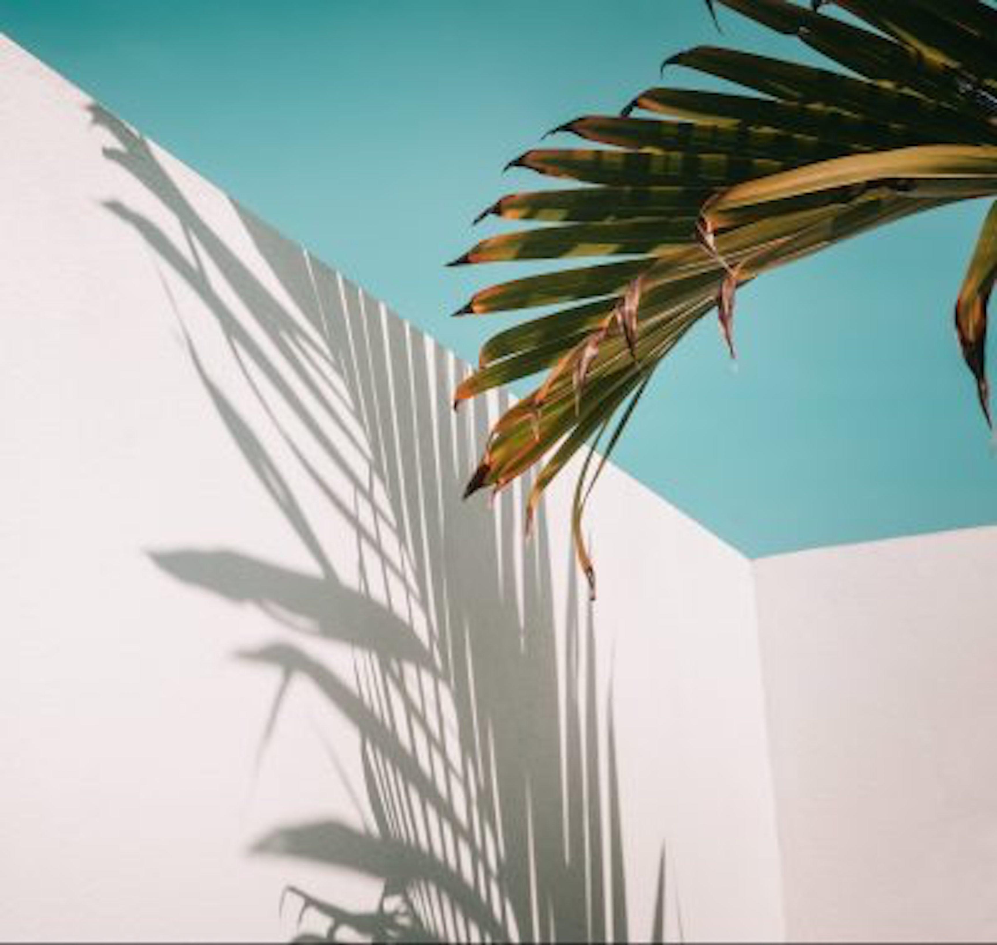 Palm tree leaf damage Tampa