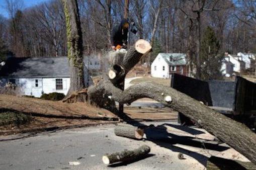 Tampa Tree limb removal