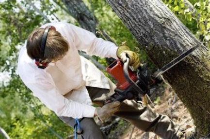 Tampa Tree worker tree cutting