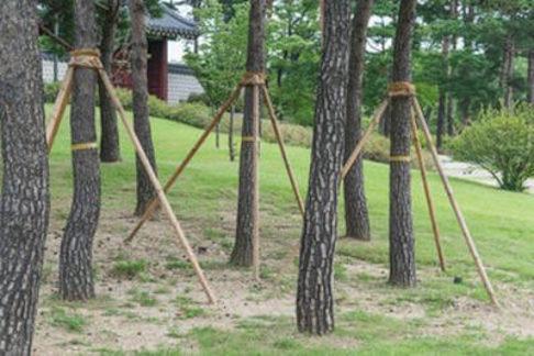 stake a tree Tampa