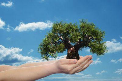 tree-growth