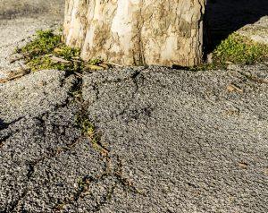 Tampa Tree Care Service When Trees Damage Concrete