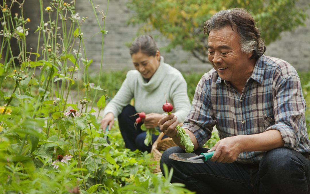 Organic Gardens & Pesticides