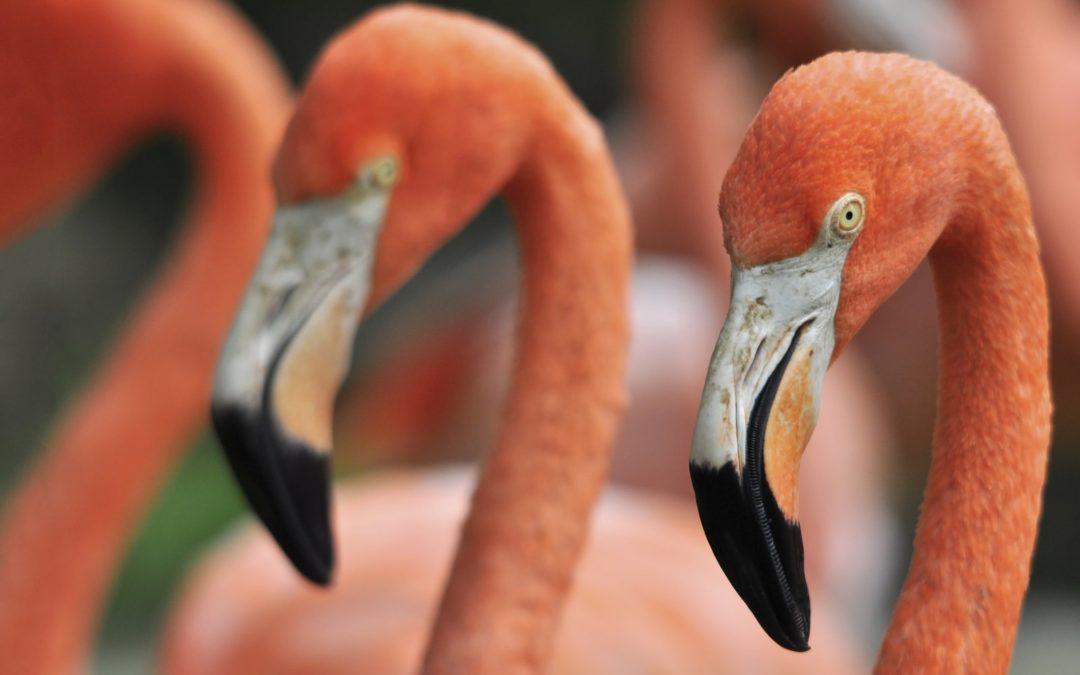 Spotlight On: Flamingo Gardens in Davie, Florida