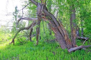 Tampa Tree Care Tree Wound Repair